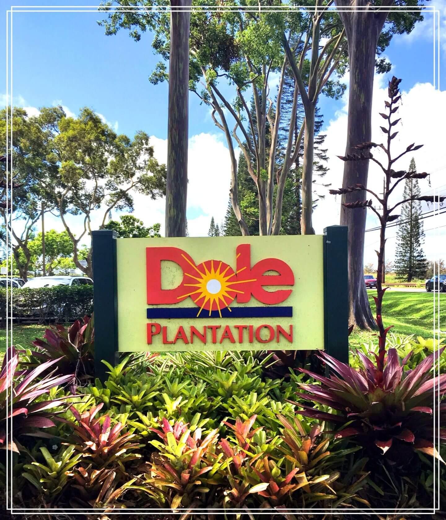 Oahu's Dole Plantation