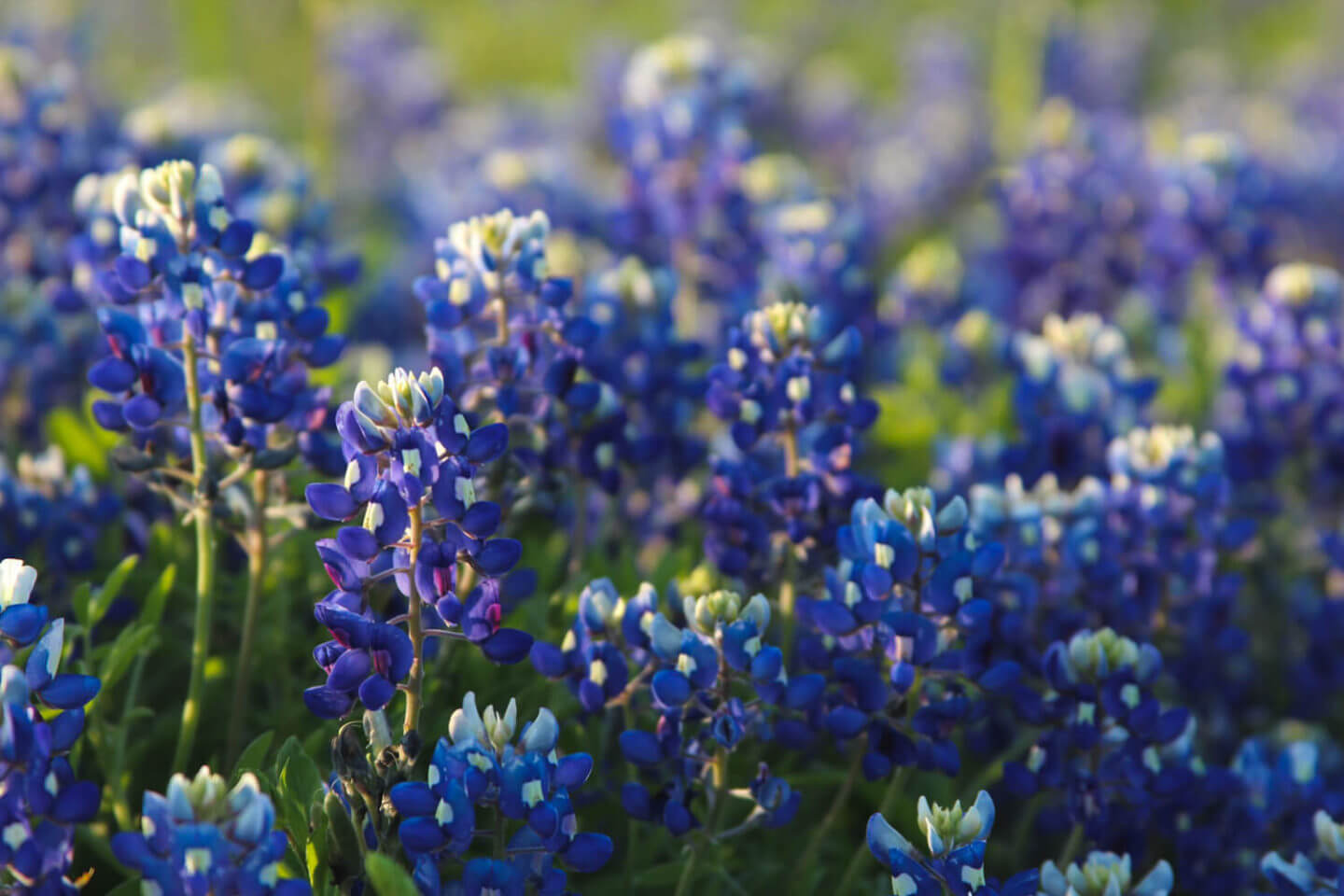 Best Spring Flowers In The Us Go Wildflower Hopping This